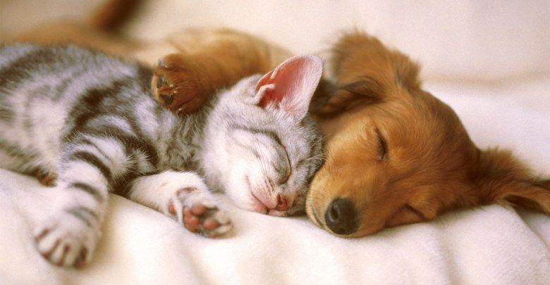 Kedi Ve Köpekleri Yıkarken Dikkat Etmeniz Gerekenler