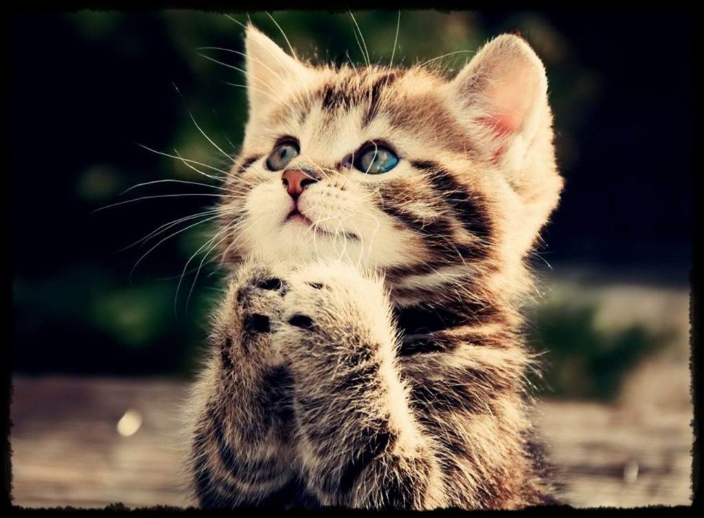 rüyada kedi görmenin anlamı